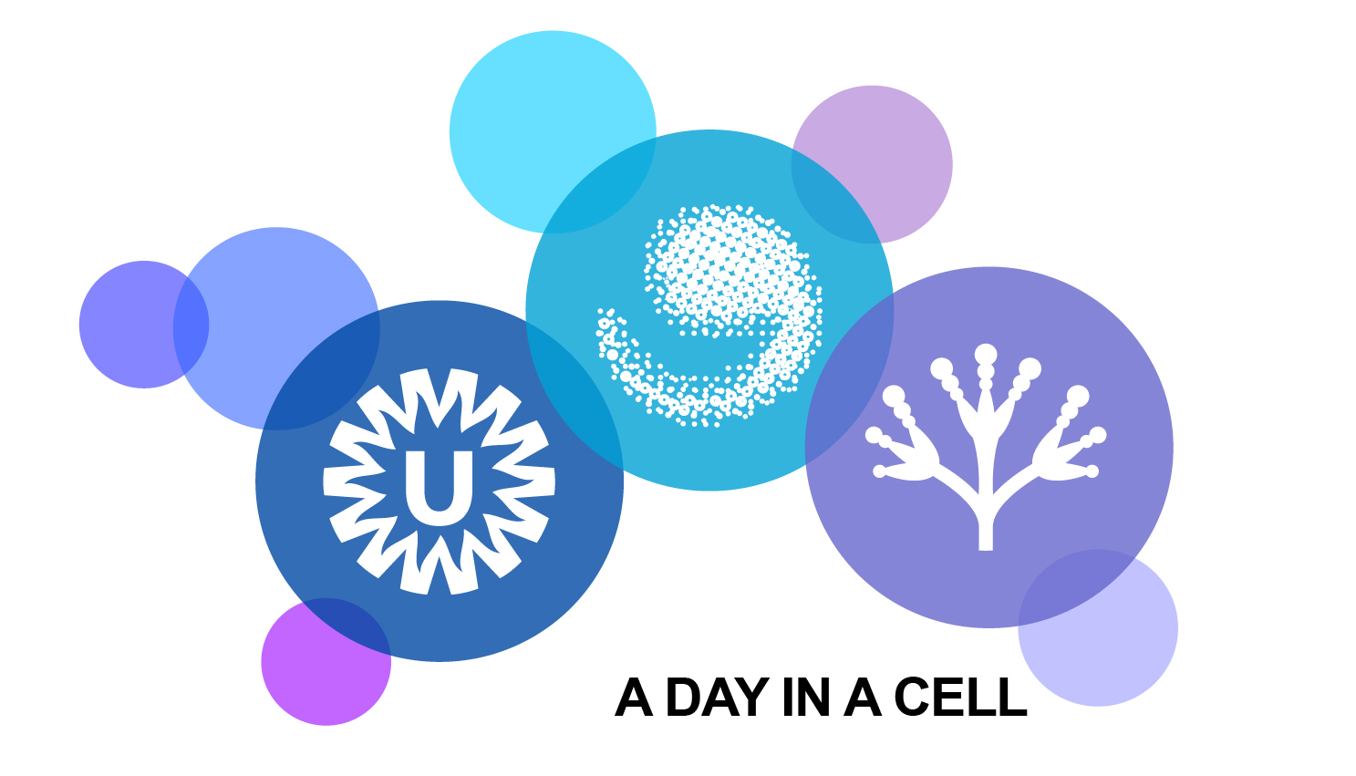 A day in the Cell Visit us with your family at the Weekend of Science Sunday October 7th 11.00 - 16.00